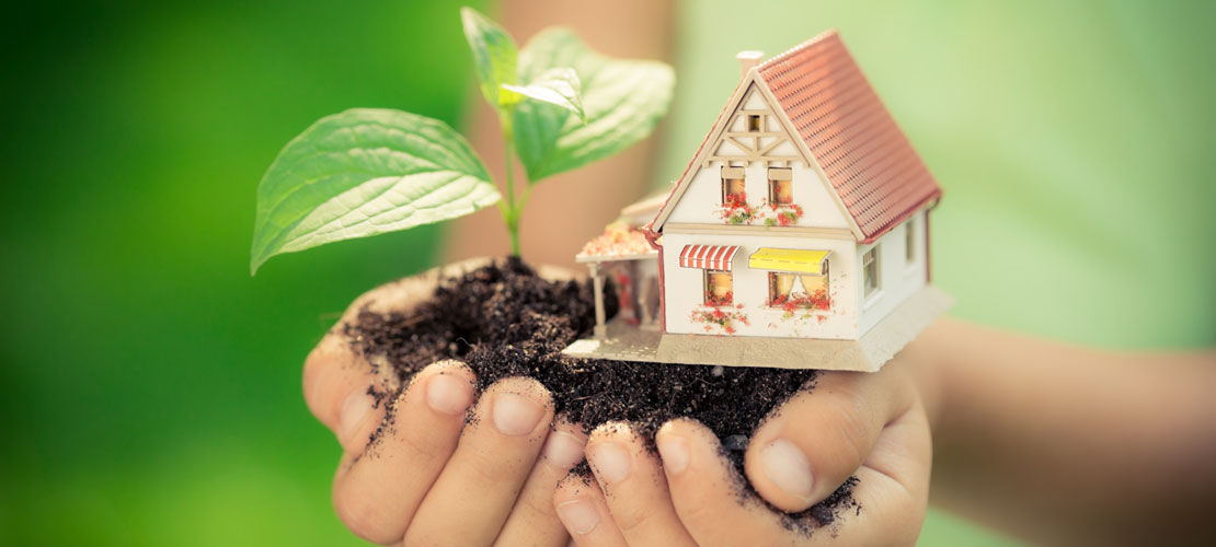 Holding-House-and-Plant.jpg