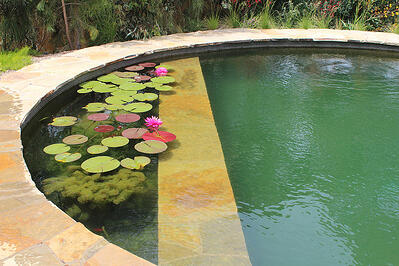 Trends Ready To Build A Natural Swimming Pool Your Clients Are