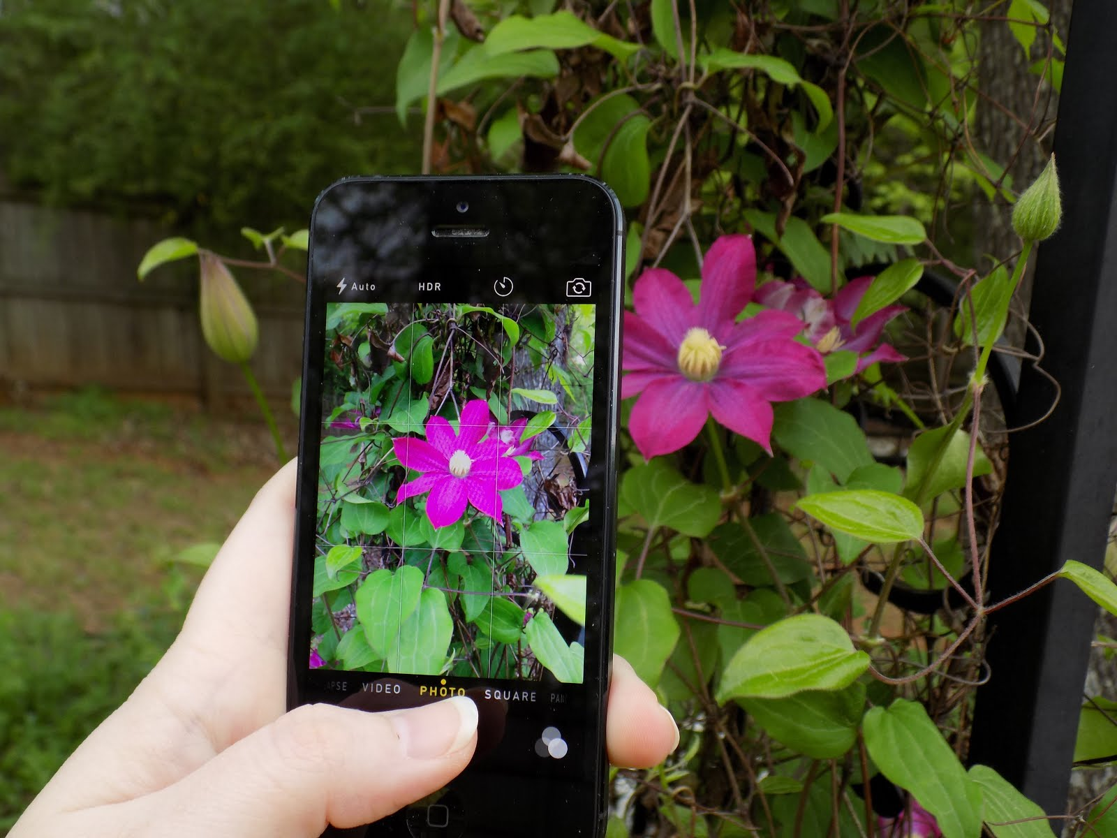 take smartphone photos of your landscape projects