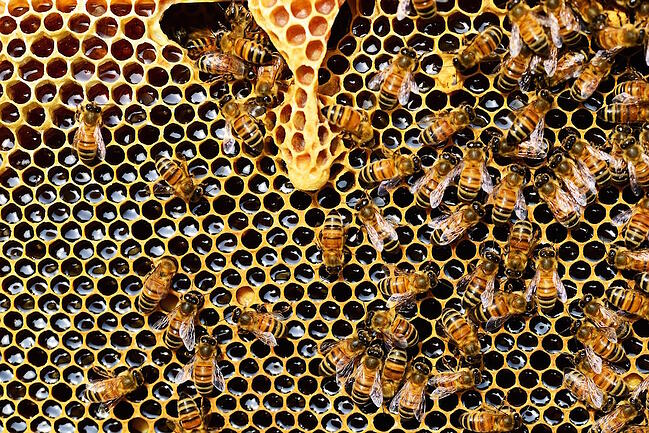 Subcontractor vs. employee: Are you correctly classifying your worker bees?