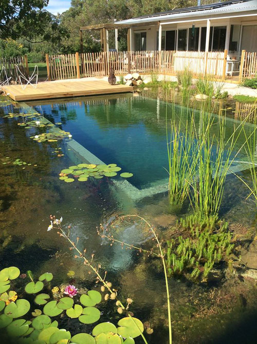 Trends Ready To Build A Natural Swimming Pool Your
